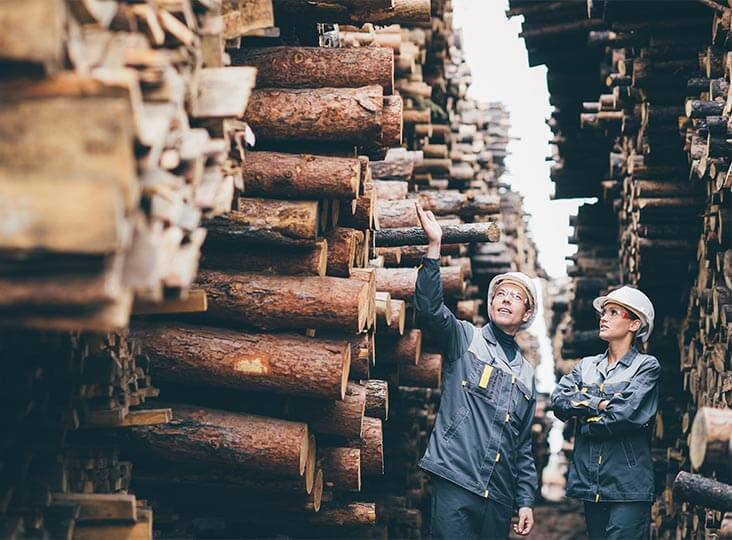 huge stack of logs and two workers looking on